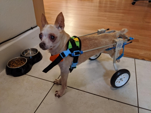 dogs wheelchair cart review