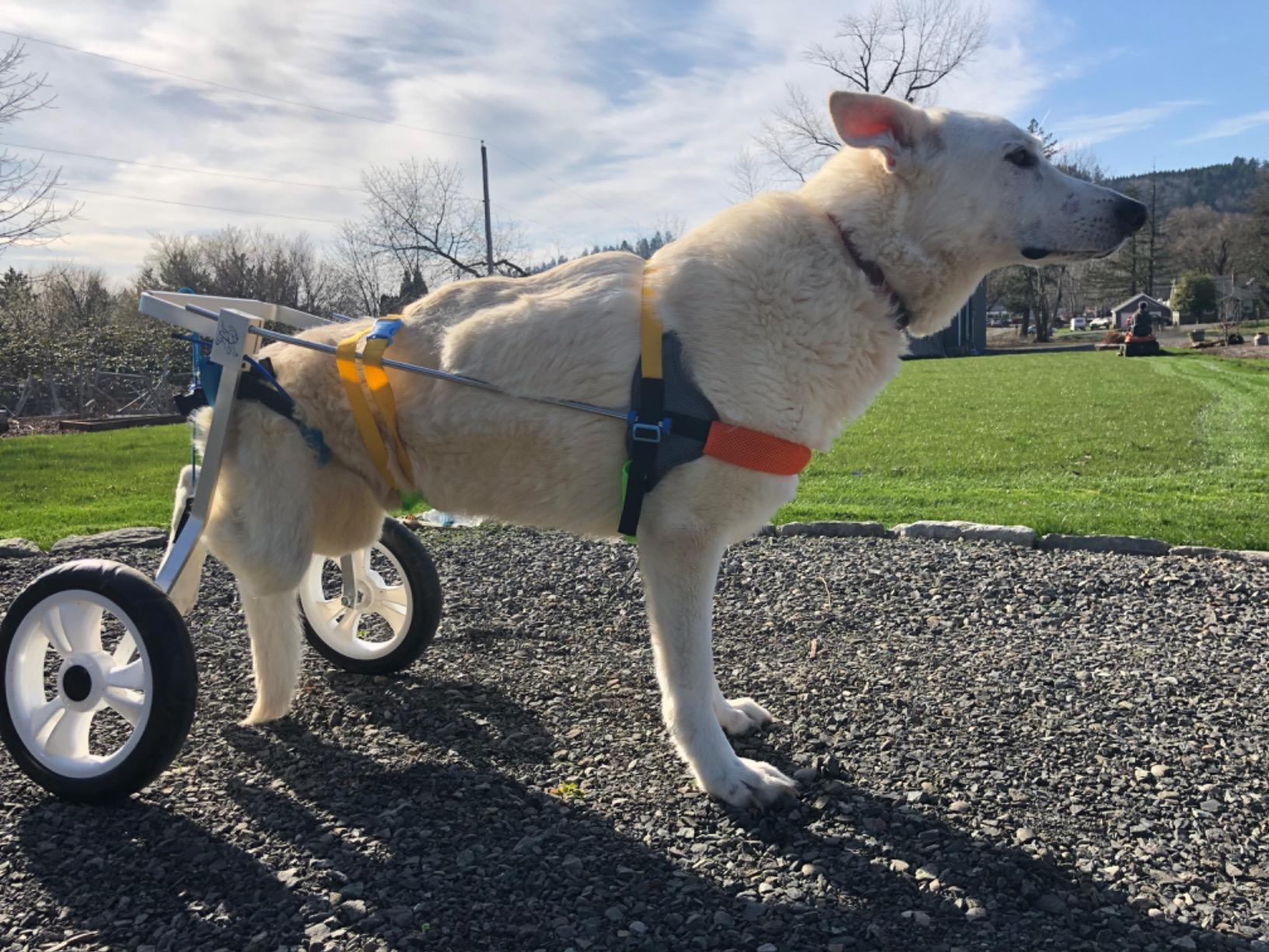 dog wheelchair review image